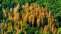 Lesy ČR chtějí černou nulu, nevylučují ani ztrátu ve stamilionech. Podíl na poklesu zisku má i kůrovec