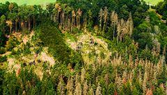 Na kůrovcovou kalamitu reagovaly Lesy ČR pomalu, tvrdí NKÚ