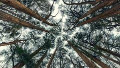 Lesní rostliny chrání před teplotními extrémy koruny stromů, tvrdí vědci