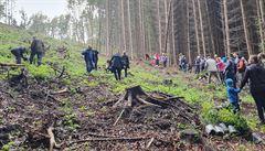 Státní Lesy ČR jsou v pololetí kvůli kůrovcové kalamitě ve ztrátě 480 milionů korun