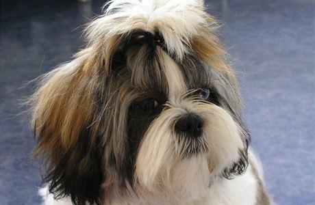 Bojí se váš pes bouřky? Někde se stala chyba, pomozte mu od začátku