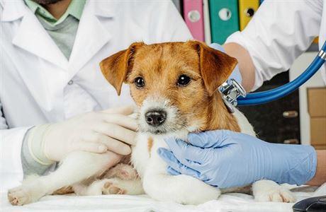 Pravidelné vyšetření je i pro psa důležité. S odčervením se začíná brzy po narození