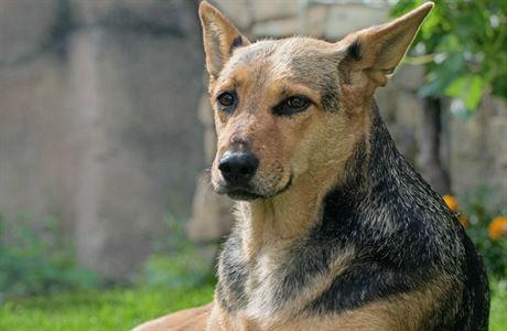 Pes hojí rány na duši. Canisterapie pomáhá všem, od dětí po seniory