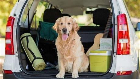 Jak naplánovat dovolenou se psem. I váš parťák potřebuje mít svůj pas