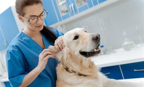 Masáž často působí jako zázrak. Pes po ní ožije, pomáhá i zlepšit vztah s páníčkem