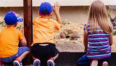 Do zoo za jednu korunu. Praha v době stávky škol snížila vstupné pro děti