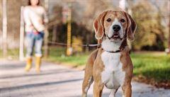 Německé ministerstvo chce, aby lidé venčili psy alespoň dvakrát denně. Nerealistické, míní pejskaři