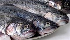 Historické úpravy sladkovodních ryb jako vzpomínka na hostiny Rožmberků i pochoutky selských stavení