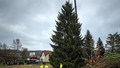 V Semilech pokáceli vánoční strom pro Prahu, na Staroměstském náměstí se rozsvítí příští víkend