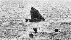 Filmaři otupili krvavé Čelisti. Ve vystřižené scéně žralok překousl malé dítě