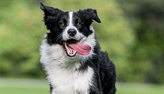 Psi se na dovolené mohou stát přenašeči nebezpečných parazitů, ti mohou ohrozit i člověka