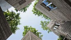 Změny klimatu ovlivní výsadbu stromů ve městech, tvrdí vědci