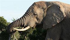 Indie provozuje lázně pro slony držené v zajetí
