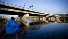 Ryby z českých řek jsou plné jedovatých látek. Sníst jednu z Vltavy je jako vypít až 100 litrů znečištěné vody