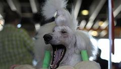 Psi po lidech opakují zívání bez ohledu na vzájemné pouto. Jde o projev empatie