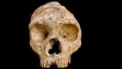 Vědci našli důkazy o existenci pravěkého druhu člověka, který žil před půl milionem let