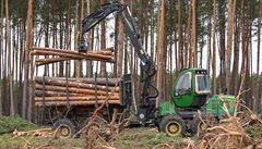 Vláda schválila vyšší příspěvky pro vlastníky lesů včetně Lesů ČR, peníze půjdou i myslivcům