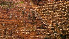 Hmyz srazil cenu dřeva na úroveň krize. Trh je přehlcený, kůrovec řádí i v okolních zemích