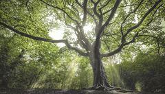 Pozdní mráz může ovlivnit migraci listnatých stromů, shodují se vědci