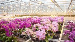 Výstava orchidejí letos v Brně kvůli koronaviru nebude