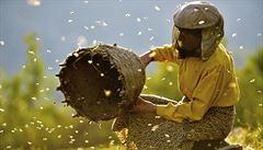 Neber příliš medu, včele se odvděčíš. Festival Jeden svět uvede i dokument Země medu