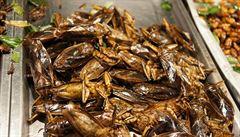 Nahradíme léky hmyzem? Smažení švábi mají 'zázračné' účinky