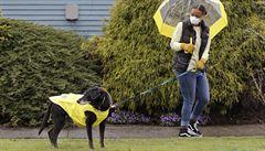 Izrael se snaží vycvičit psy, aby dokázali vycítit koronavirus ze slin nakažených