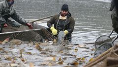 Britští rybáři přejmenovali ryby, aby šly lépe na odbyt. Brexit ztížil jejich export