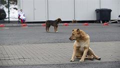 Toulavé psy a kočky nikdo nekrmí. Restrikce kvůli pandemii jsou pro ně 'rozsudkem smrti'