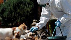 Kočky se v New Yorku nakazily koronavirem. Panují obavy z paniky, o přenosu na člověka ale nejsou důkazy