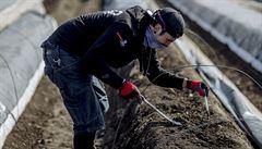 Česká pole obdělávají cizí ruce. Vmíře propachtované půdy zaujímá ČR nelichotivou třetí příčku v Unii