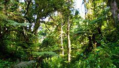 Čeští vědci chtějí přispět k ochraně pralesa v Kongu