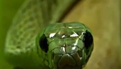 Indičtí vědci pojmenovali nového hada podle Salazara Zmijozela ze světa Harryho Pottera