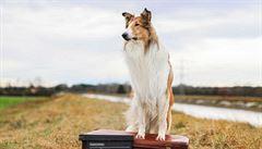 Filmové premiéry: návrat kolie Lassie, splněný americký sen i dokument s erotickým nádechem