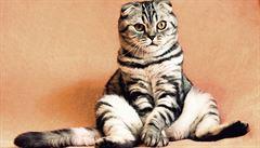 Zvířecí mazlíčci potřebují během pandemie svůj řád a rituály. Jinak se z toho 'zblázní'