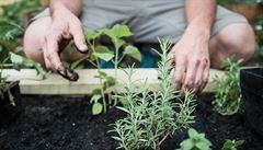 10 rad, jak založit komunitní zahradu ve městě. Čím se řídit při výběru místa a proč pozvat sousedy?