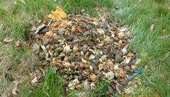 Strážníci v Praze objevili ve škarpě přes 700 krabů, všichni uhynuli. Pachatel chtěl zřejmě ušetřit za likvidaci