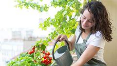 Samozásobitelem ve městě. Poradíme, s jakou zeleninou začít, jak připravit truhlík a proč zasadit afrikány
