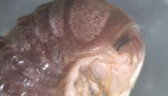Vědci objevili na Twitteru nový bizarní druh houby