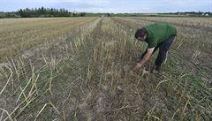 Současné sucho v ČR je horší než v minulých dvou letech. Zemědělci ale mohou doufat v deštivější květen