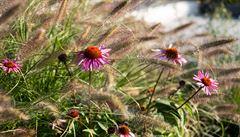 Čeští vědci přispěli k výzkumu funkce hormonů cytokininů, které ovlivňují vývoj rostlin