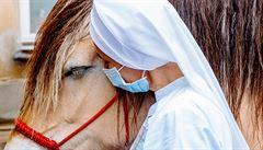 Pacienty do nemocnic v Praze chodí těšit psi, pod Petřínem koně
