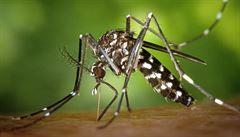 Pozor na cizí vetřelce, varují vědci. Škodlivé invazivní druhy se šíří napříč planetou