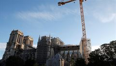Francie už vybrala duby na opravu věže chrámu Notre-Dame, bude potřeba tisíc stromů