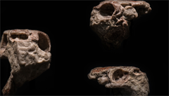 Zkameněliny z Česka mění pohled na počátek vývoje zubů