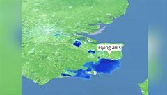 Meteorology ve Velké Británii zmátli létající mravenci, na radaru vypadali jako dešťový mrak