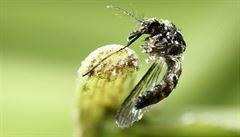 Teplé a vlhké léto. Lýkožrout je na ústupu, vydatné deště naopak svědčí komárům a klíšťatům