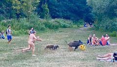 Sociální sítě se baví neobvyklou honičkou. Nudista běžel za divočákem, který mu ukradl laptop