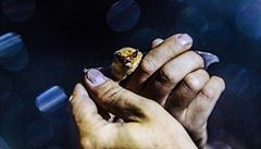 Počet netopýrů, kteří zimují v jeskyni Býčí skála, vzrostl, tvrdí vědci