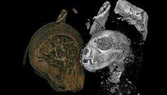 Vědci digitálně prozkoumali zvířecí mumie ze starověkého Egypta. Získali tak trojrozměrné snímky